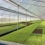 Lonas na agricultura: como criar diferencial nas vendas?